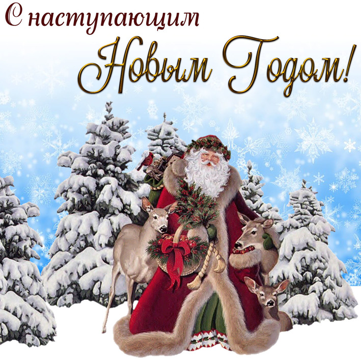 Дед Мороз и звери, С Новым Годом 2019